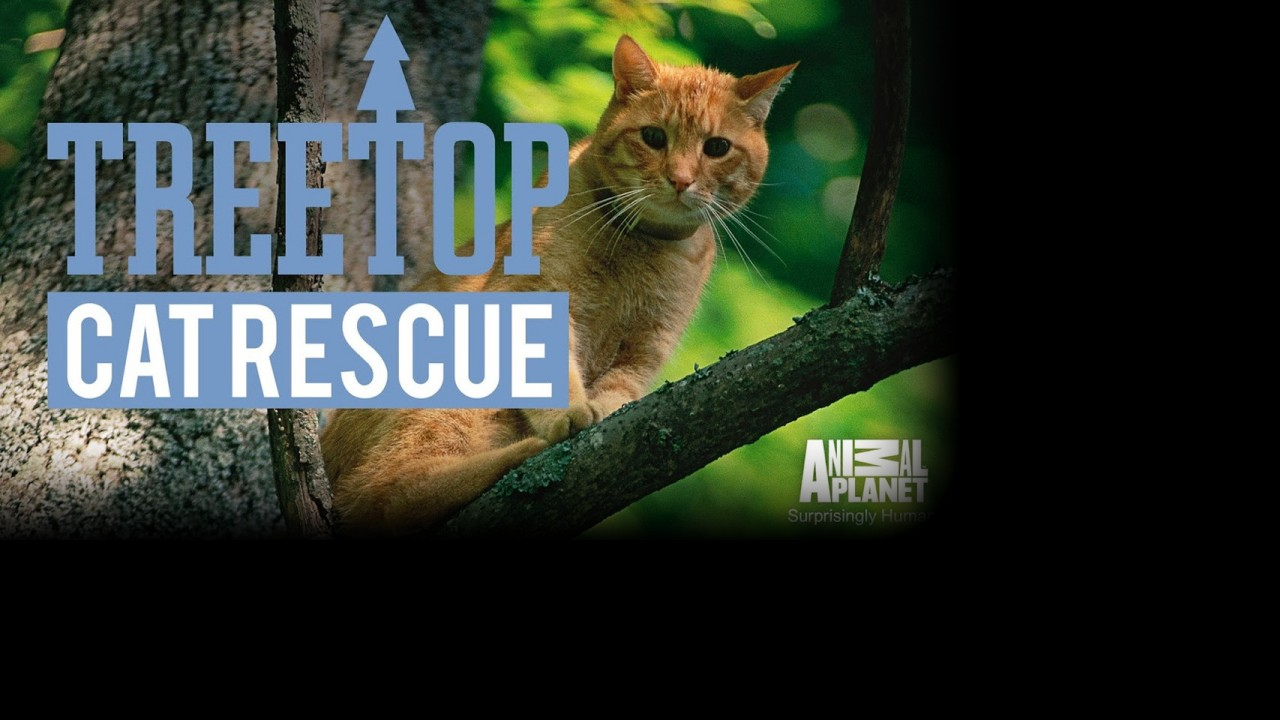 Treetop Cat Rescue Cost